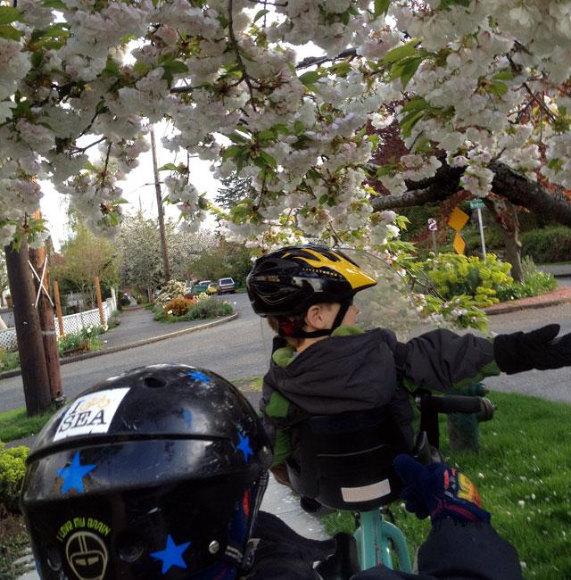 We brake for cherry blossoms