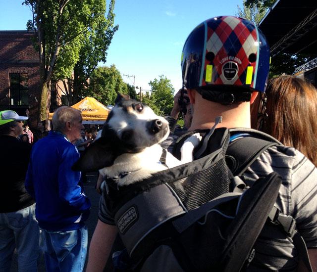 Backpack doggie