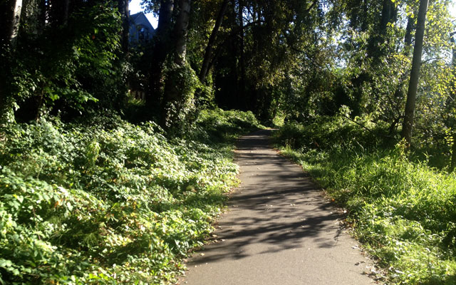 Trail through Montlake Playfield